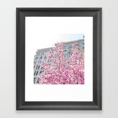 NYC Cherry Blossoms Framed Art Print