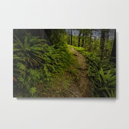 New Zealand Forest Path Metal Print
