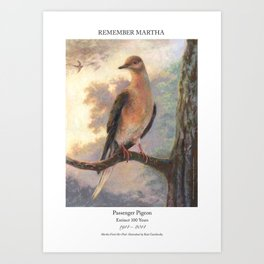 Passenger Pigeon - Martha Finds Her Flock  Art Print