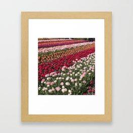 Tulips of Holland (Keukenhof Gardens, The Netherlands) Framed Art Print