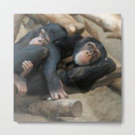 Chimpanzee_2014_1202 Metal Print
