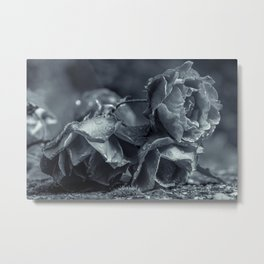 Lying black and white roses covered by raindrops Metal Print