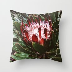 Protea and Raindrops  Throw Pillow