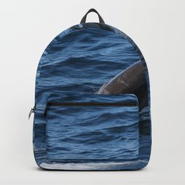 Dolphine Backpack