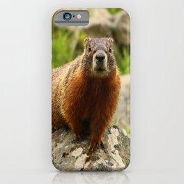 On The Rocks Marmot iPhone Case