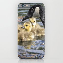 Downy Cuteness iPhone Case