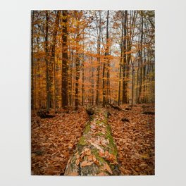 Down Fall Tree Poster