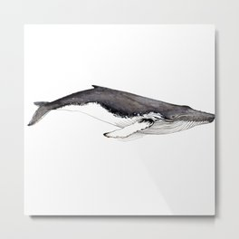 Humpback whale for whale lovers Metal Print
