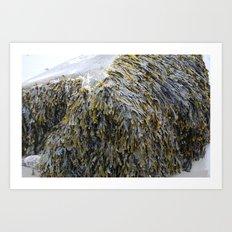 Fresh Kelp Art Print