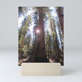 Sunlit Sequoias Mini Art Print