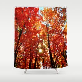 Sun in the Trees Shower Curtain