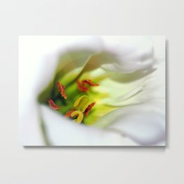 Lily White  Secrets Metal Print