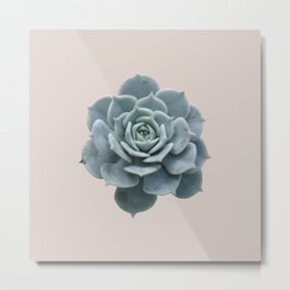 Single Succulent Metal Print