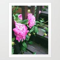 Peek-A-Boo Flowers Art Print