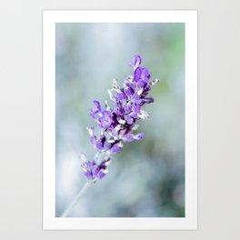 Cool Vintage Lavender Art Print
