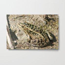 Frog in Mud Metal Print