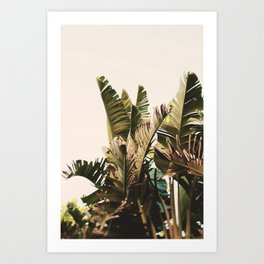 Equatorial Art Print