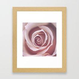 Pink Pastel Rose Framed Art Print