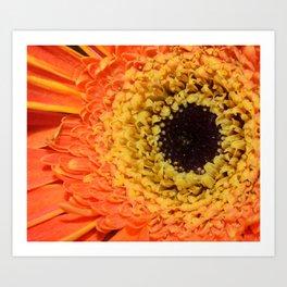 daisy please? Art Print