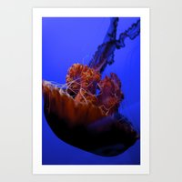 jelly fish Art Prints featuring Jelly Fish Jelly Fish  by EmmaTeele
