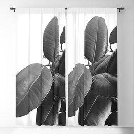 Ficus Elastica #23 #BlackAndWhite #foliage #decor #art #society6 Blackout Curtain