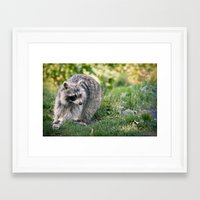 racoon Framed Art Prints featuring Racoon by Ruslana S