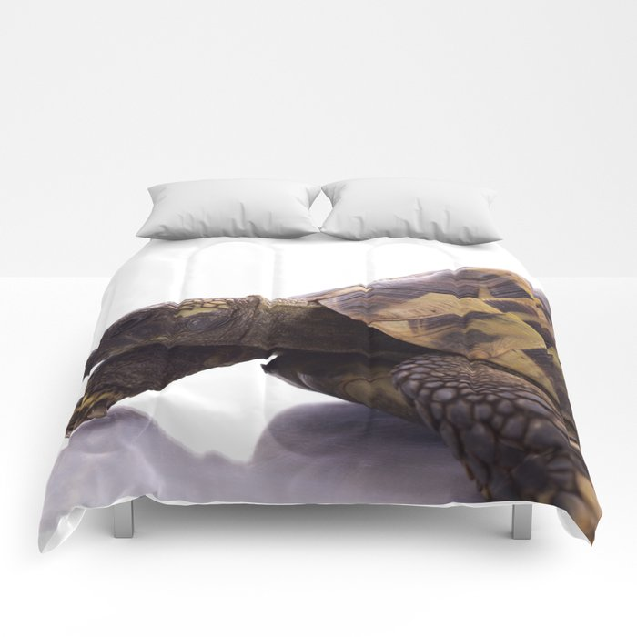 Greek land tortoise Comforters