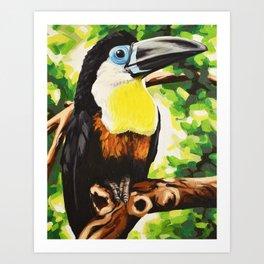 Channel Billed Toucan Art Print