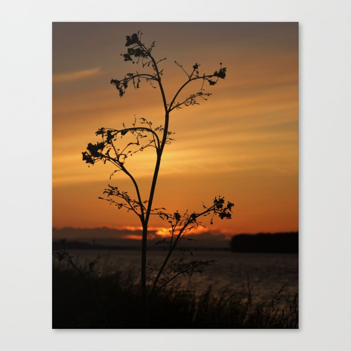 Alone with beauty Canvas Print