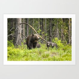 Charting the Course - Grizzly 399 with Her Four Cubs Art Print