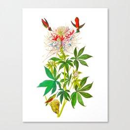 Ruff-Necked Hummingbird Canvas Print
