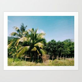 Rural region with palms in colombian caribbean Art Print