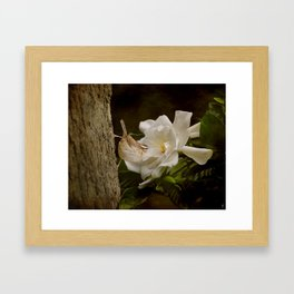 The Scent of the Gardenia Framed Art Print