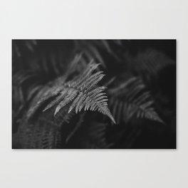 fairy fern II Canvas Print