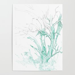 Madrone Tree Poster