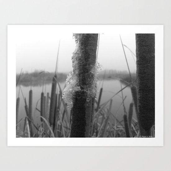 Water fog and frost Art Print