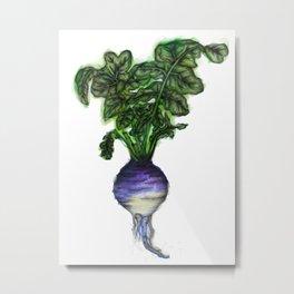 Rooted: The Rutabaga Metal Print