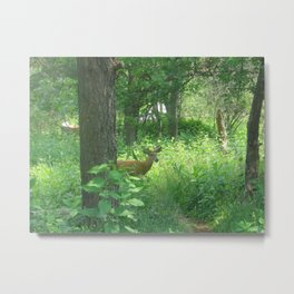 Deer in Shenandoah Metal Print