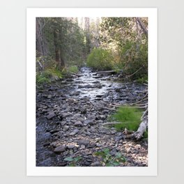 Peaceful Walk Creek Bed Art Print
