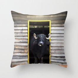 Bufalo Throw Pillow