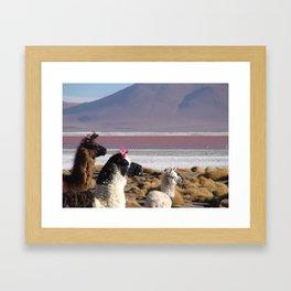 Lovly Lamas Framed Art Print