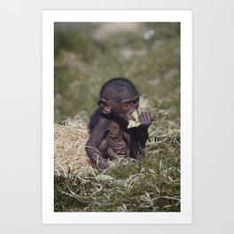 Baby Bonobo Art Print