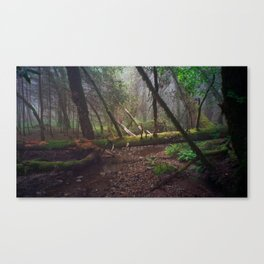early morning, laurel dell Canvas Print