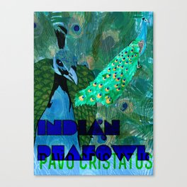 Pavo cristatus (Indian Peafowl/Peacock) Canvas Print