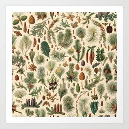 Vintage Pinecones Designs Collection Art Print