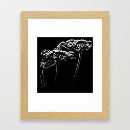 Sunlit Cow Parsley Against a Black Background Framed Art Print