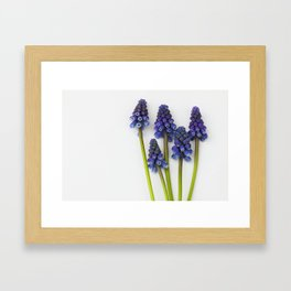 Muscari - Blue Grape - JUSTART © Framed Art Print