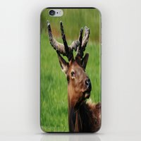 elk iPhone & iPod Skins featuring Elk by Tianna Chantal