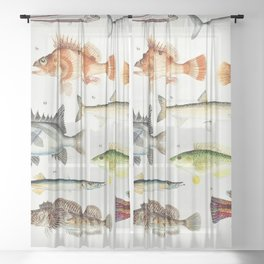Illustrated Colorful Southern Pacific Exotic Game Fish Identification Chart No. 2 Sheer Curtain