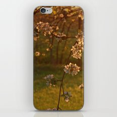 Golden Light over Apple Blossoms iPhone Skin